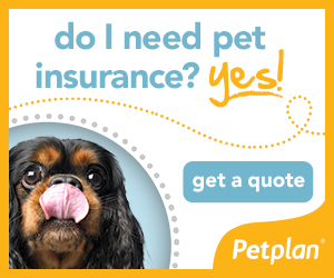 welly_needpetinsurance_300x250