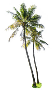travel-insurance-palm-tree